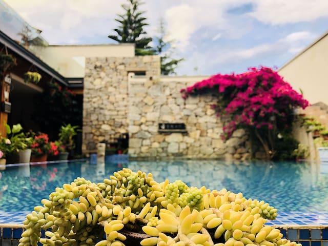 院子泳池旁边的各种野蛮生长的多肉植物