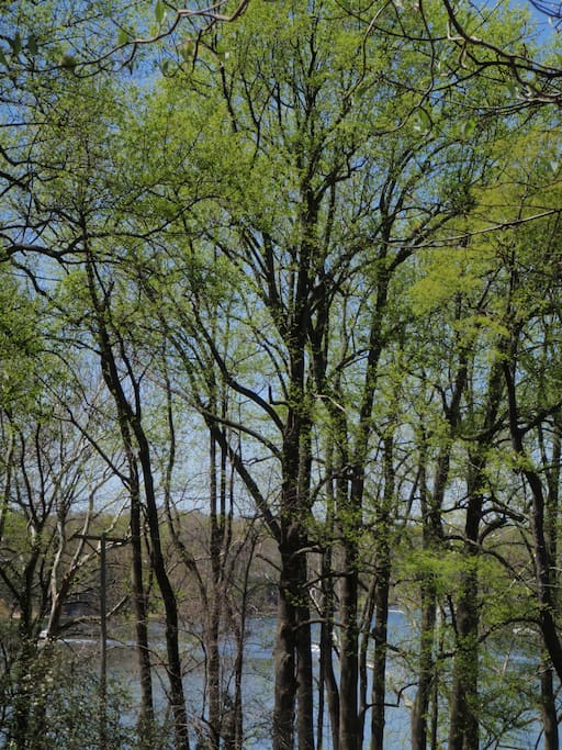 view of the St. Leonard Creek through the trees in spring