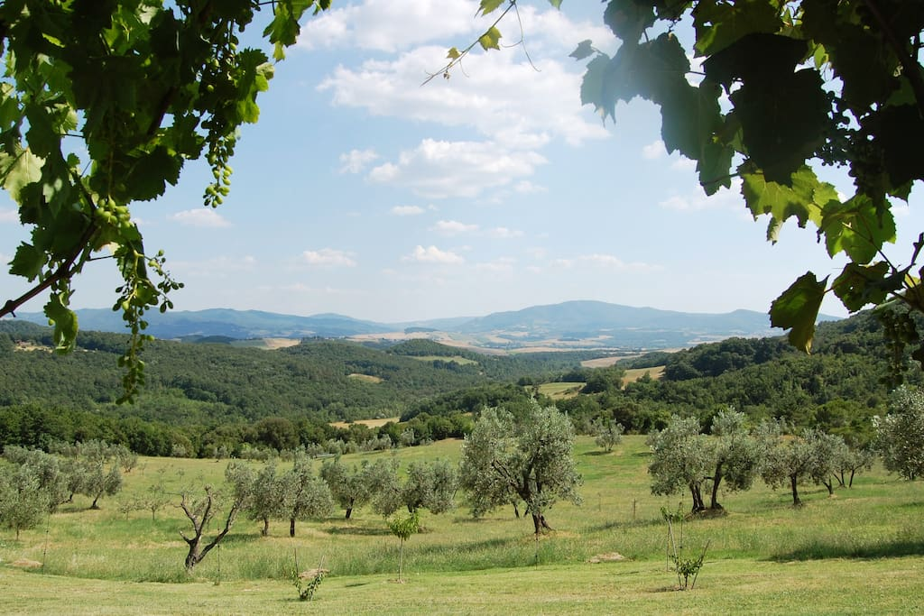 Breath-taking unspoilt views of olive groves and rolling hills