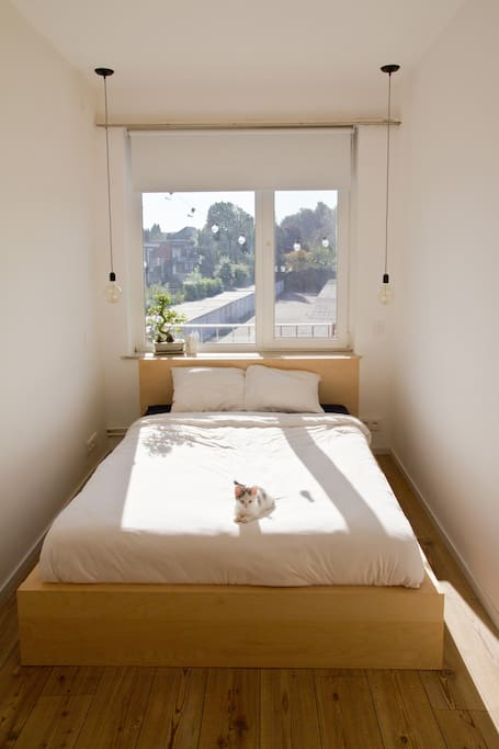 Guest bedroom with optional cat