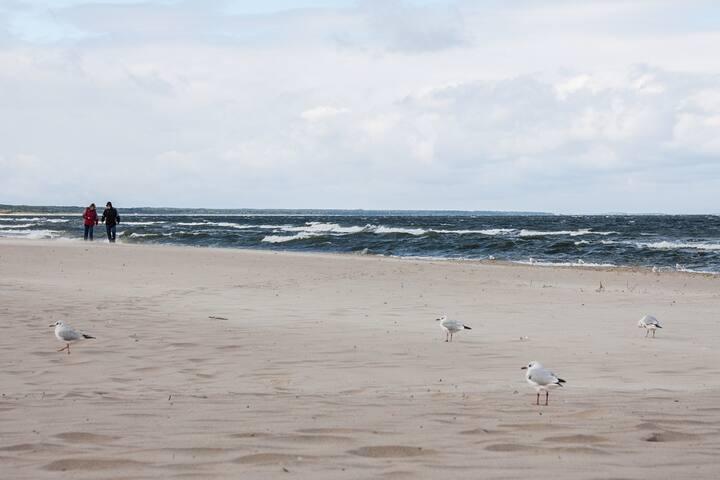Ferienwohnung (16) Zinnowitz, strandnah, zentral