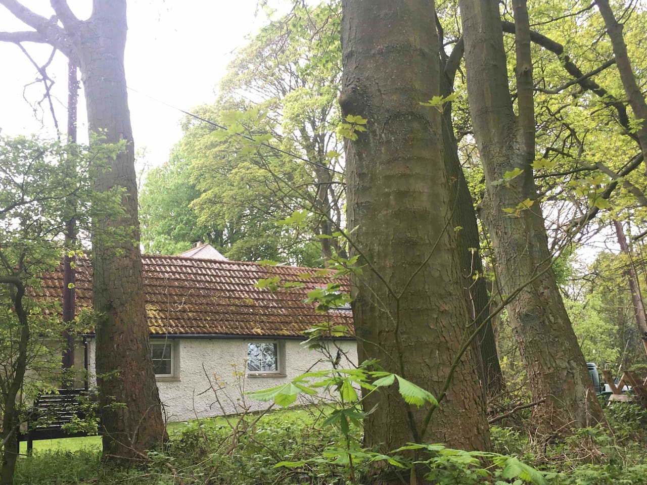Fairbeck Lodge situated next to an idyllic wood.