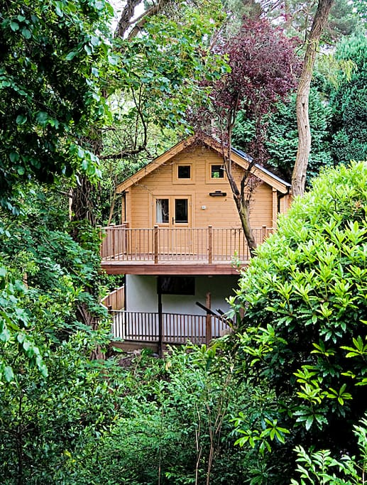 Cabin in the tree canopy