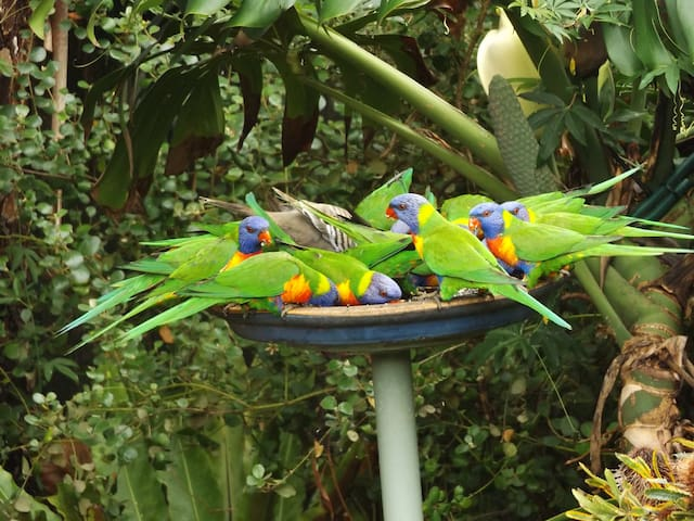Relaxed, Native Garden, Lorikeets - Nelson Bay - House