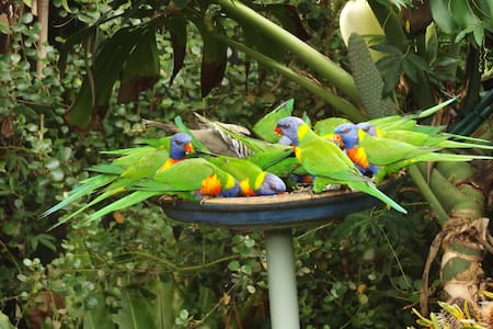 Relaxed, Native Garden, Lorikeets - Nelson Bay - Haus