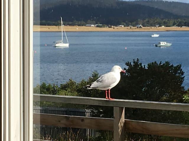 Tassie Shack - five min from Maria Island Ferry