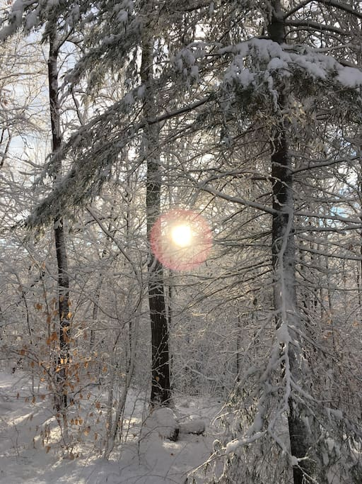 Sun shining through the winter forest.