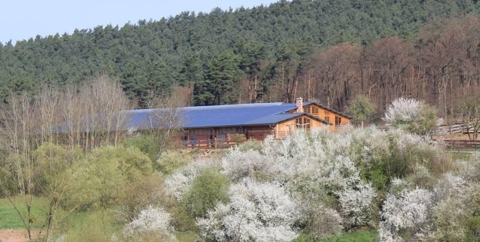 Kleinwallstadt Blockhütte