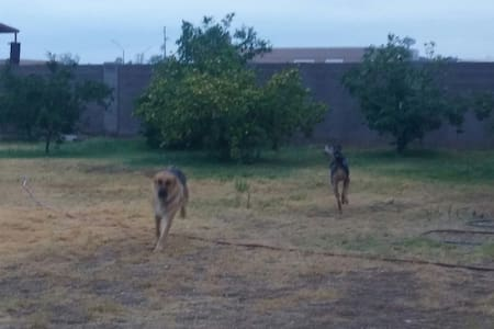 Largest DOG PLAYGROUND AROUND, 3 acres - Buckeye