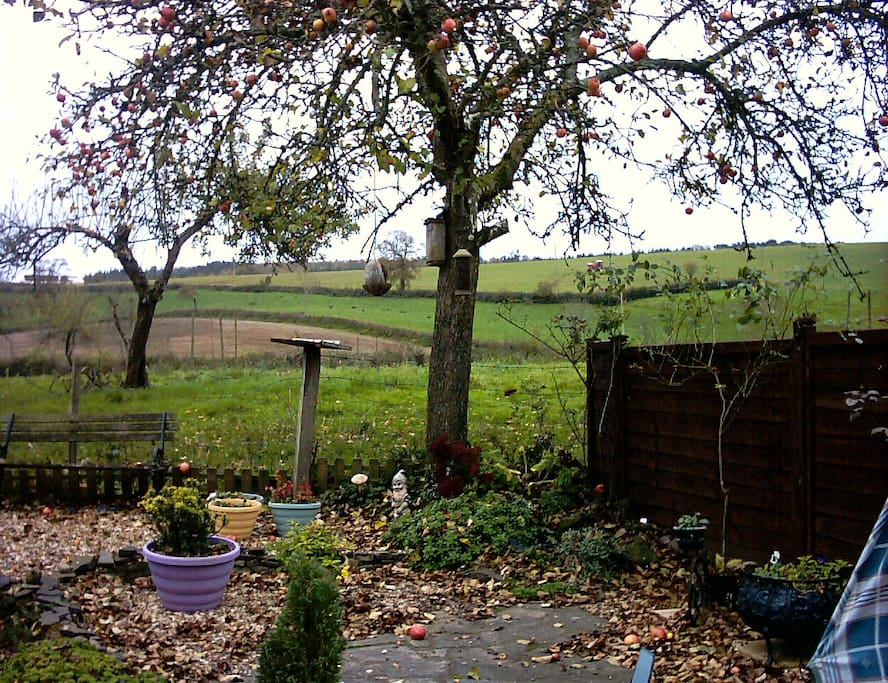From back garden