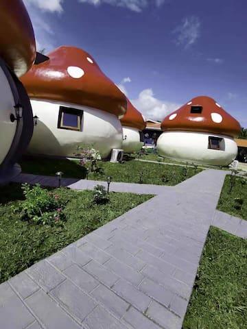 Mushrooms garden homestay