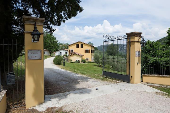 Pace tra gli ulivi in Umbria