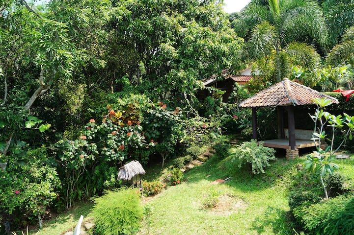Garden view from main bedroom on upper floor