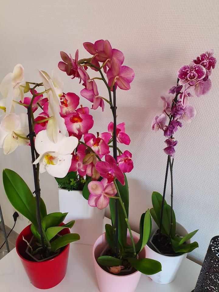 Gîte l'orchidée