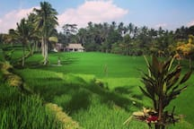villa kerasan green view from  balinese subak temple
