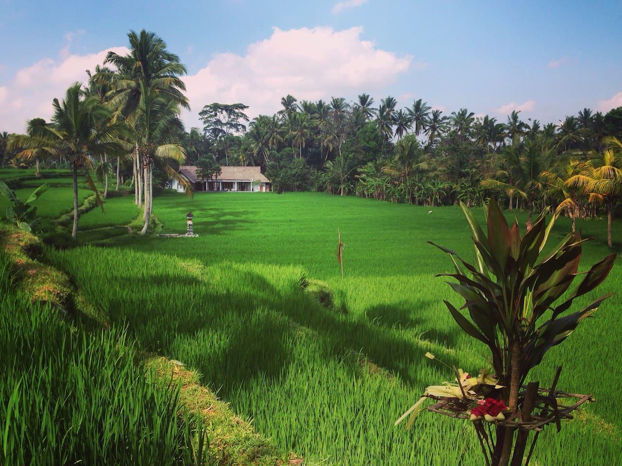 villa kerasan green view from  balinese subak temple