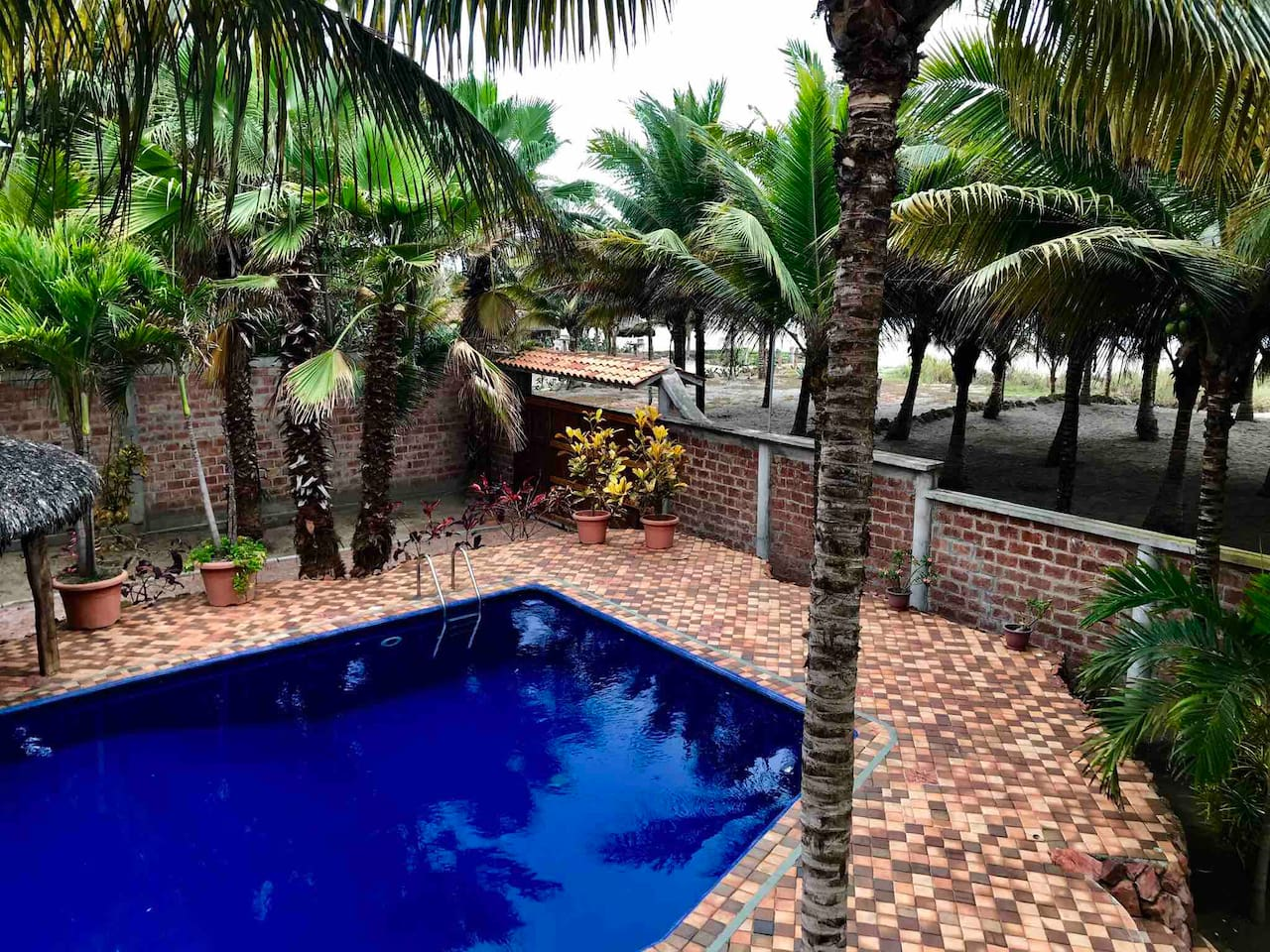 Beautiful pool, 9 ft privacy wall, 60 Coconut trees  line ocean beachfront
