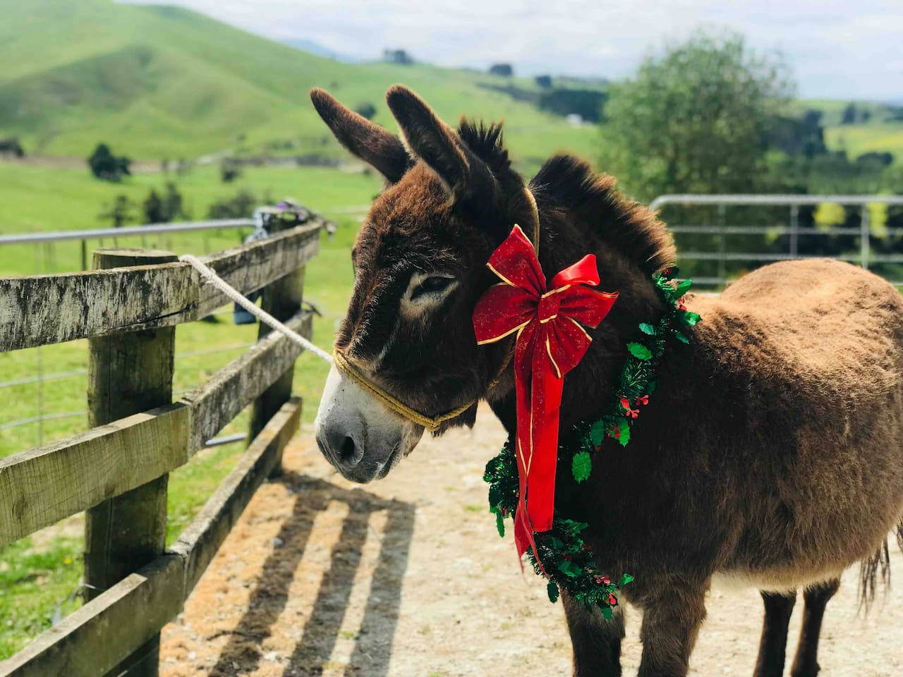 Charlie our friendly donkey looks forward to meeting you....