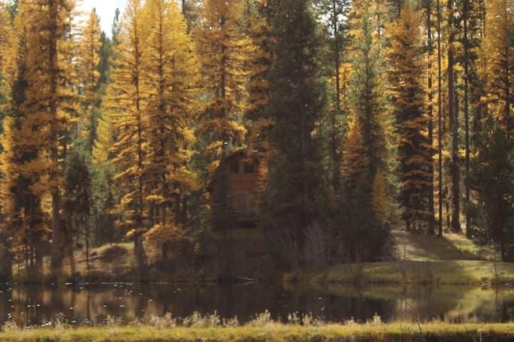 """""""Elk's Run"""" cozy cabin nestled in the pines"""