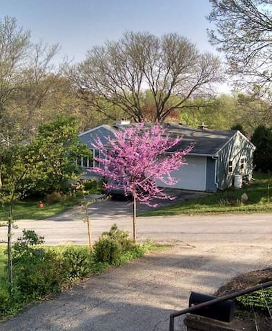 Redbud in May.
