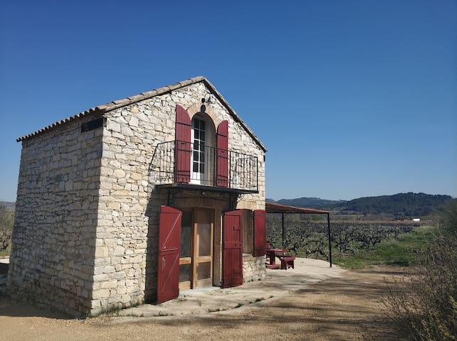 Le cabanon dans les vignes