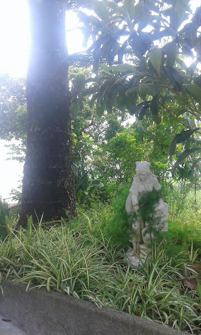 A Maria da Fonte guarda o Pinheiro