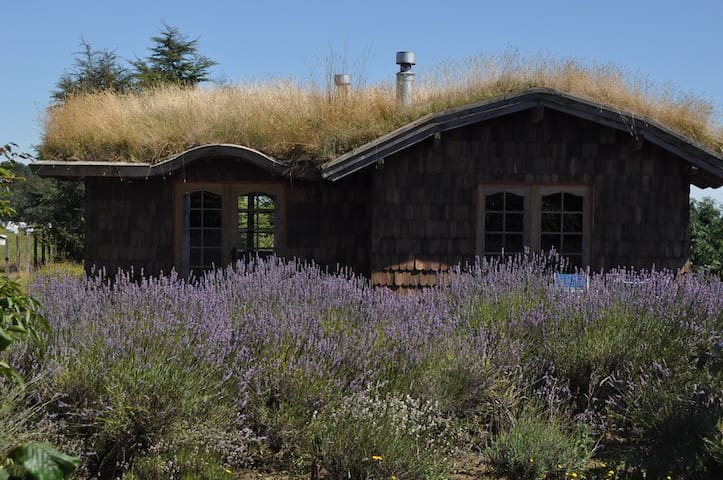 Charming B&B in the chilean Lakes, Puerto Octay