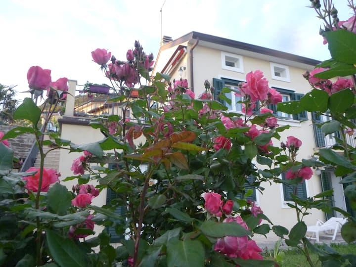 Alle Rose Barcolane