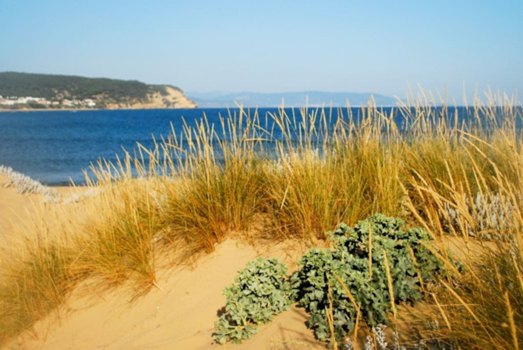 Pristine, unspoiled beaches in walking distance