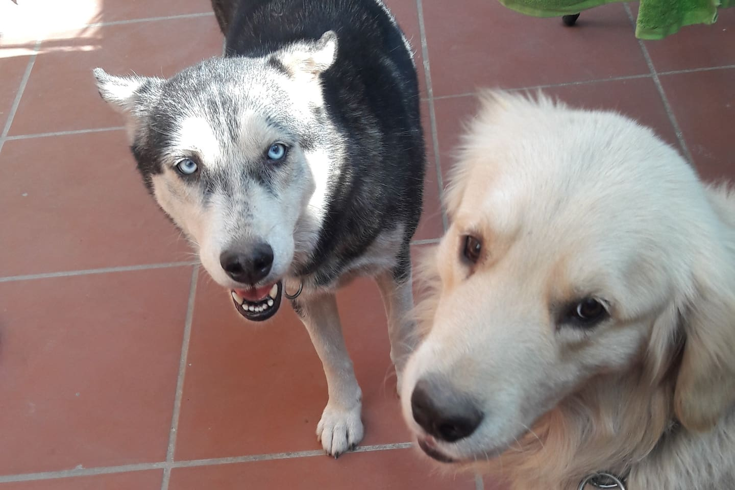 We are Cuci and Leo, part of the family. We are living in the garden . We are very friendly and happy dogs. We will be good friends