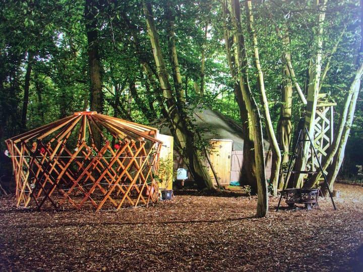 Isolated woodland Yurt  - Ancient Woodland Retreat