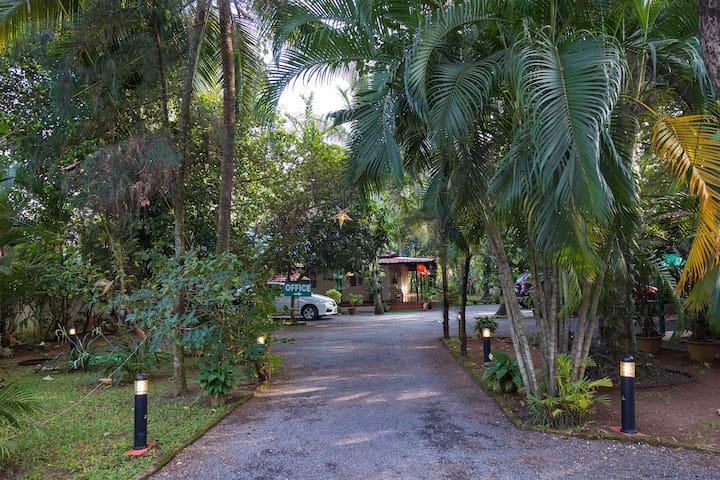 Palm Grove Villa Homestay - A home close to nature