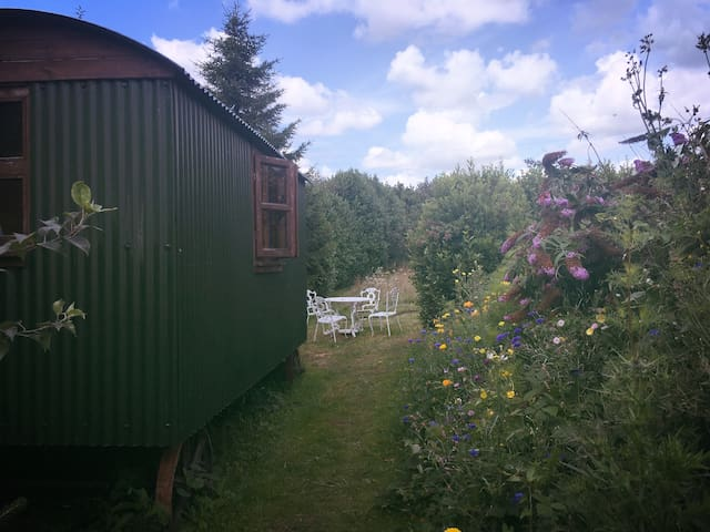 Purbeck Valley shepherds hut