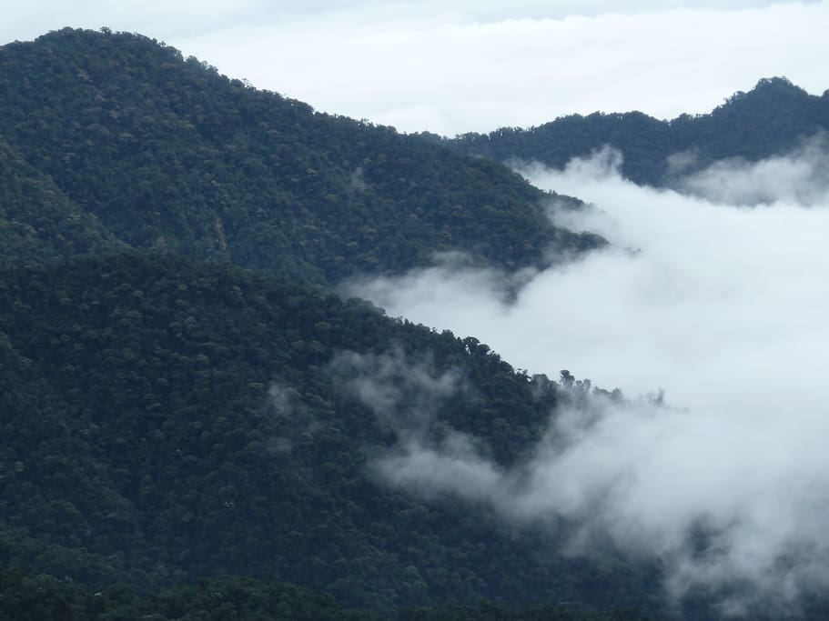 we adjoin the magnificent Cotacachi cayapas national park - 650,000 acres of pristine wilderness