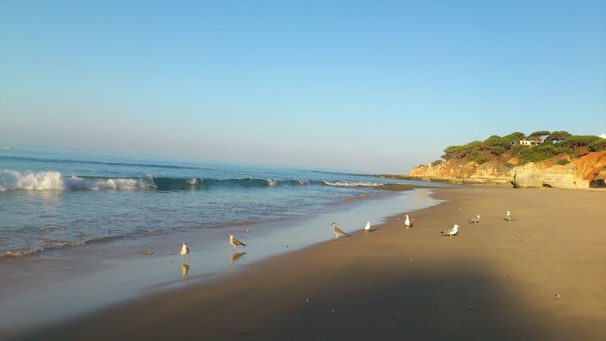 T2-Férias a 3 minutos da praia - Olhos de Água - Pis