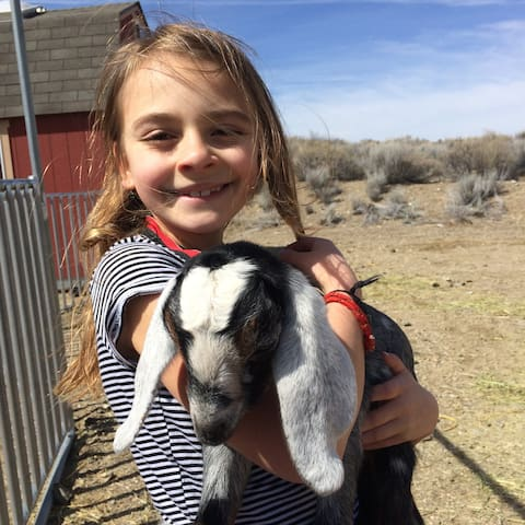 Guests can interact with the goats. Snuggling baby goats is encouraged.