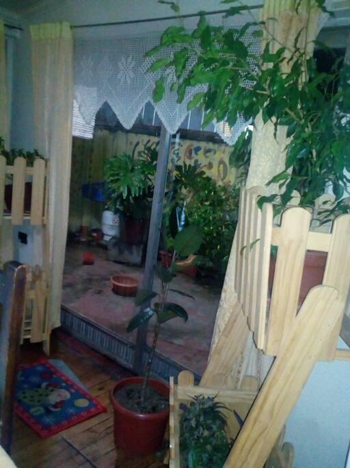 las plantas presentes en mi hogar