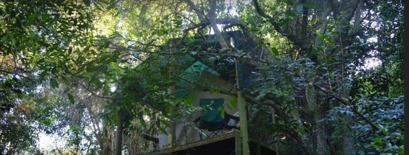 Magical Deep Forest Tent - Nature lodges for Rent in Knysna Western Cape South Africa & Magical Deep Forest Tent - Nature lodges for Rent in Knysna Western ...