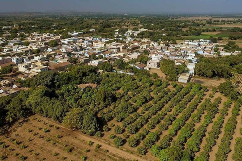 Ariel view of the orchard