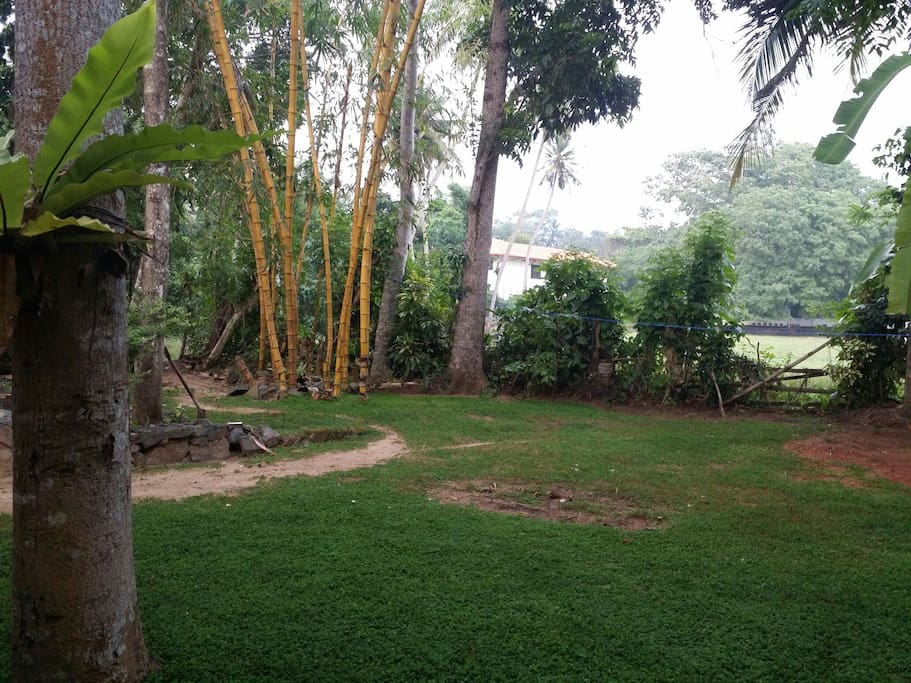 Greenish home garden with bbq facilities