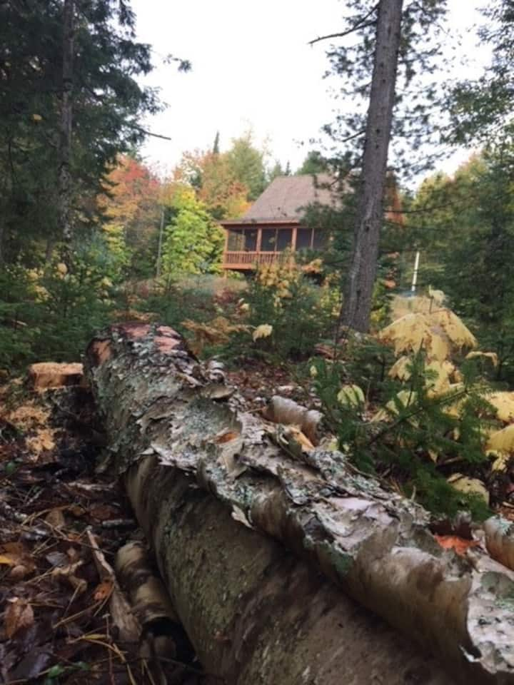 Remote Cabin on Nash's Lake