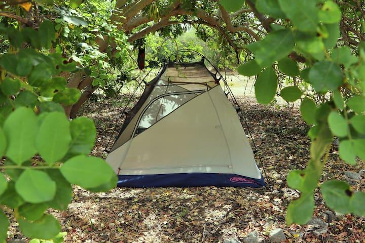 Posto tenda. Sotto il Carrubo.