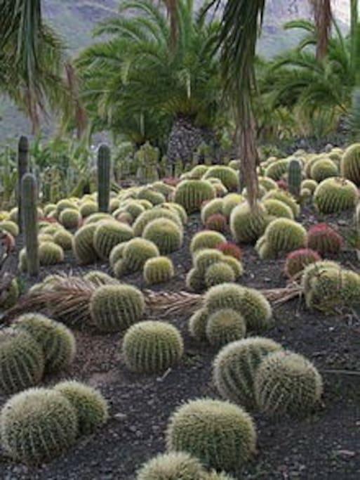 Cactus Aldea