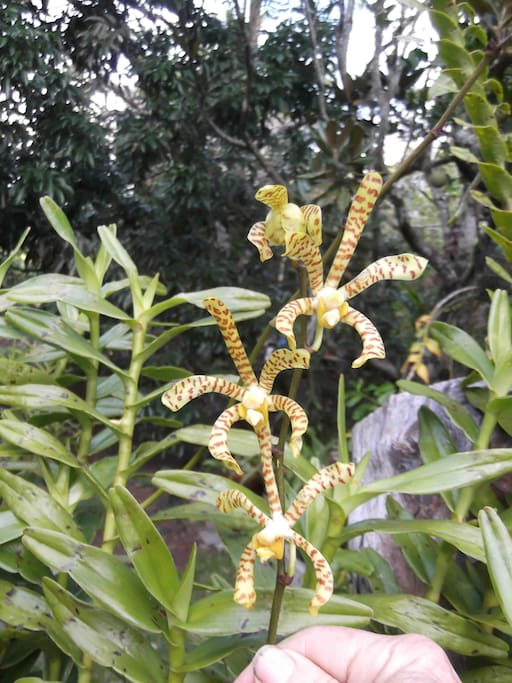 orchids in June