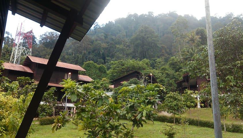 Taman Negara Endau Rompin Selai