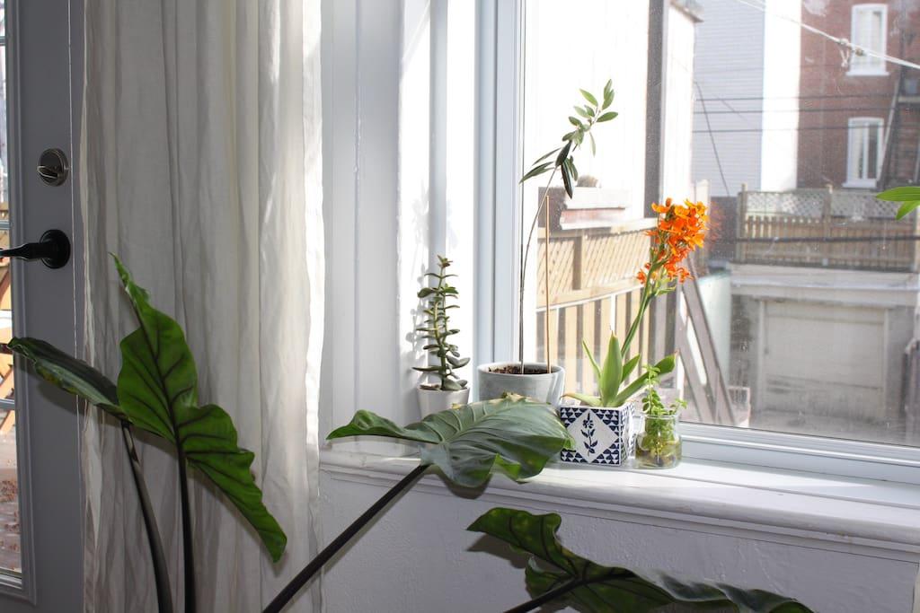 Une très belle luminosité partout dans l'appartement