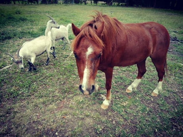 PONY LANE  Shamus the little leprechaun pony and the  little photo bombers