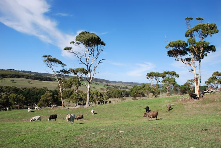 Lisieux Farm on the Fleurieu- Bed and Breakfast.