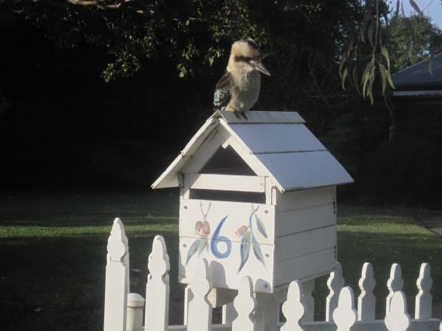 Aussie kookaburra resting on the letterbox Jacaranda Cottage