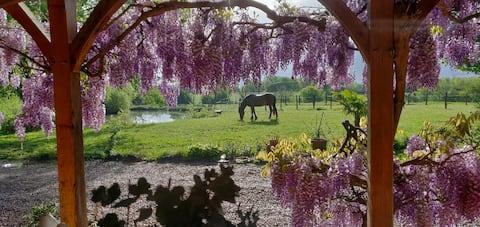 Petit Paradis à Montagny-près-Louhans